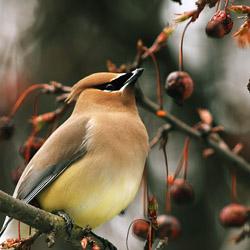 Birdscaping_1