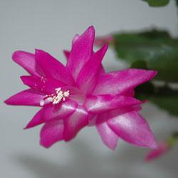 cactus-1
